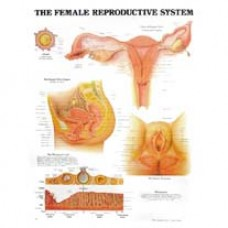 Anatomical Chart, Female Reproductive System