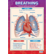 Breathing chart