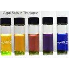 Algal Photosynthesis kit