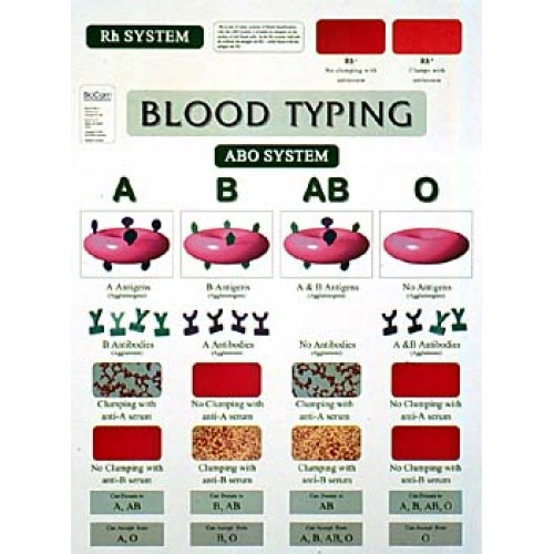 Chart Blood Typing